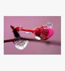 Spring Jewels Photographic Print