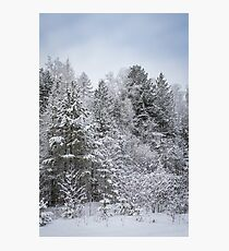 snow covered trees in Siberia. Photographic Print