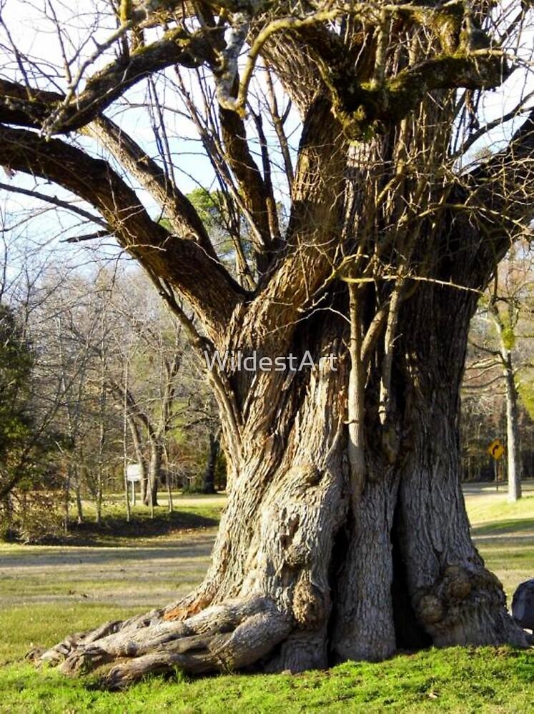 the osage orange tree