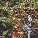 Pacific Northwest Fall Waterfall Nature Photography by artcascadia