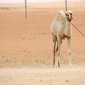 White camel, UAE  by sylvianik