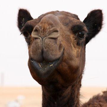 Camel in Abu Dhabi camel market, Abu Dhabi Emirate  by sylvianik