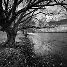 lake Wendouree Tree by Christine Wilson