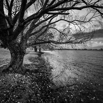 lake Wendouree Tree by Maiden