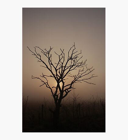 Foggy Morning Silhoutte Photographic Print