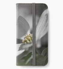 Dogwood Tree in Full Bloom This Season iPhone Wallet/Case/Skin