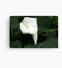 Lily of Kew Canvas Print