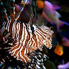 Lionfish by Melissa Fiene
