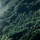 Deep Dark Forest by Dirk Wuestenhagen