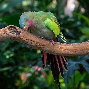 Lovebird by JohnPoon