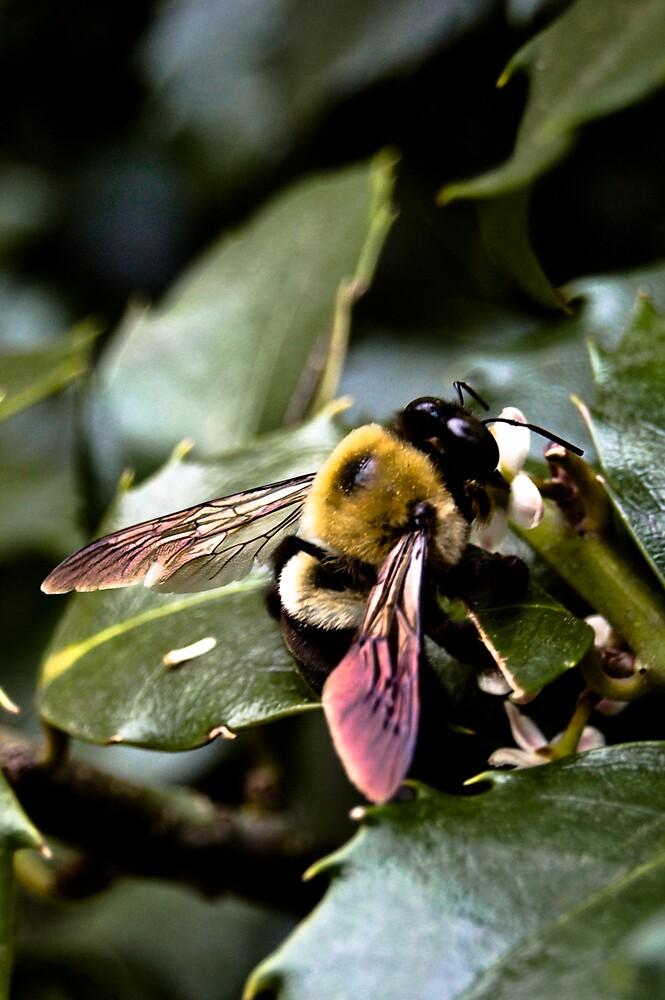 Buzz by Rachel Blumenthal