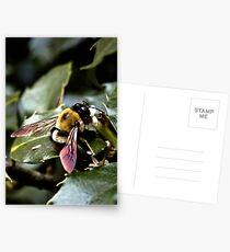 Buzz Postcards