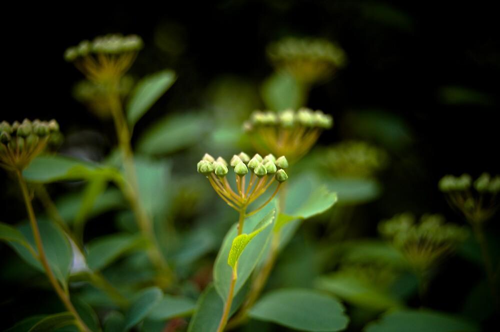 Spring Greens by Rachel Blumenthal
