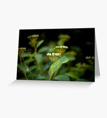 Spring Greens Greeting Card