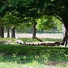 Spring Wood by Bradley Old