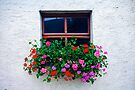 Flower Box by photosbyflood