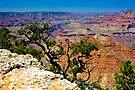 Grand Canyon Over The Edge by photosbyflood