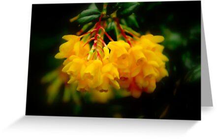 Yellow Bells by Richard Hamilton-Veal