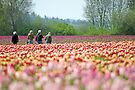 A Walk In The Tulips. by Todd Rollins