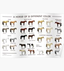 Horse Colors Poster Poster