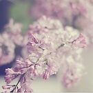 Spring Lilacs by Kristybee