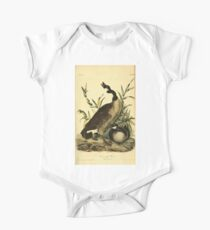 James Audubon Vector Rebuild - The Birds of America - From Drawings Made in the United States and Their Territories V 1-7 1840 - Canada Goose One Piece - Short Sleeve