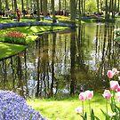 Tulip Reflexionen - Keukenhof Gärten, Holland von BlueMoonRose