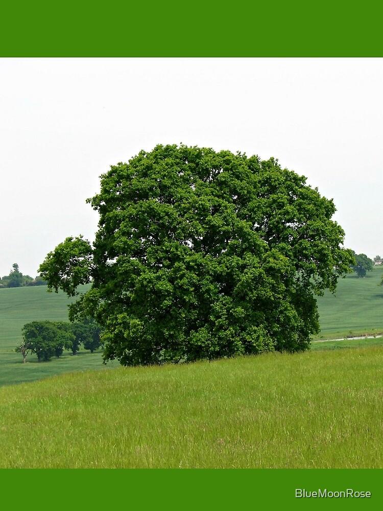 Hillside View - Einsamer Baum von BlueMoonRose