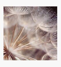 Spun Gold Photographic Print