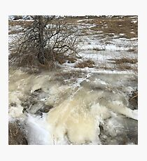 Tree in the Ice Flow Photographic Print