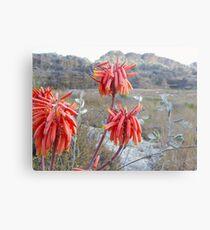 Saftige Blumen in Isalo Metalldruck