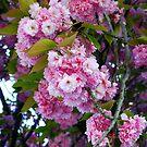 Paris in blossom. by naranzaria