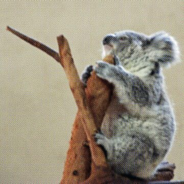 Cute Koala Sleeping on Branch by HarperDrewArt