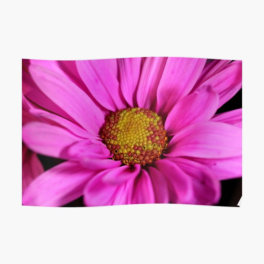 Schön in pink Poster