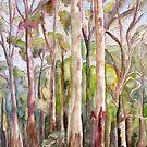 Australian cool temperate rainforest by Avril E Jean