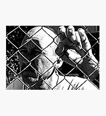 David C - Trapped - Harsh B&W Photographic Print