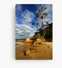 Cocora Beach - Eden Canvas Print