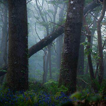 Through The Forest by laurenpbennett
