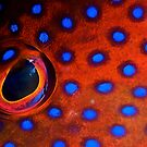 Coral Trout Eye by Melissa Fiene