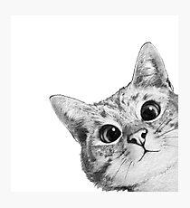 Lámina fotográfica gato furtivo