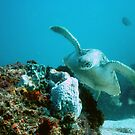 Green turtle glide by jenitae