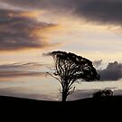 Wagon at sunset by Maryanne Fenech-Gatt
