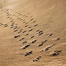 Crossing Paths II by SD Smart