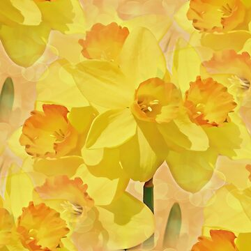 Sparkling Daffodils by JudyPalkimas