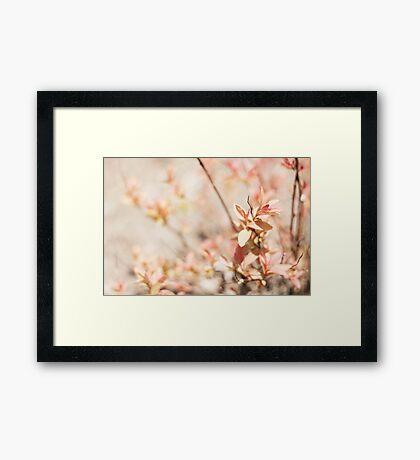 Pink Vintage Sunday Framed Print