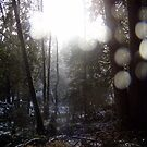 Forest Sun Rays in the Snow #65 by Dawna Morton