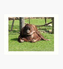 Bored orangutan Art Print