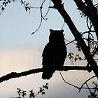 Great Horned Owl Silhouette by Alyce Taylor