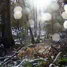 Forest Sun Rays in the Snow #68 by Dawna Morton