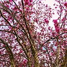 Spring Trees Pink Delight by Bo Insogna